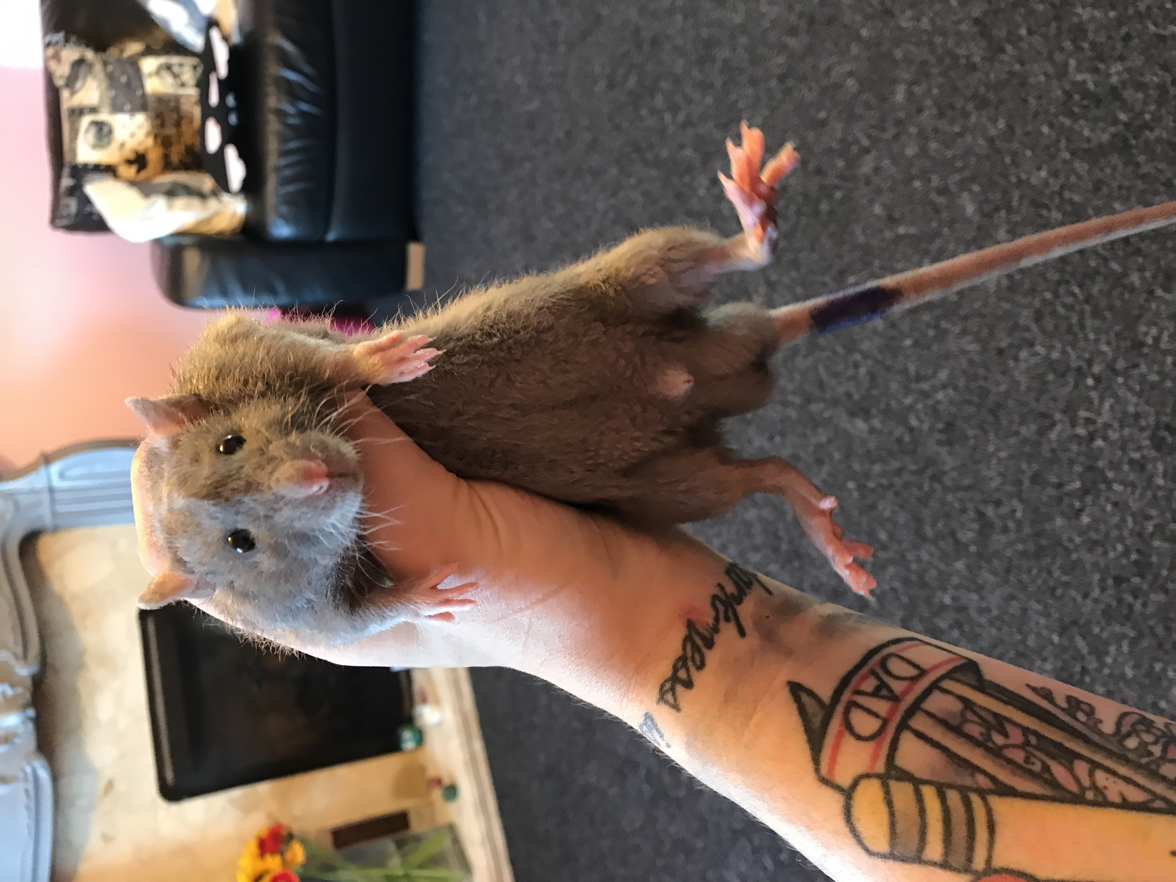 Rattray The Sharpest Blade (Blade)