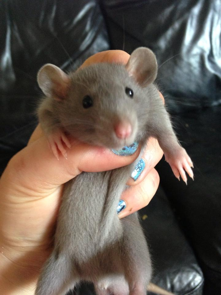 Rattray Mr Loverman (Shabba)